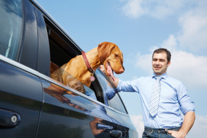 Ein Hundetransport mit dem Auto sollte gut geplant werden.