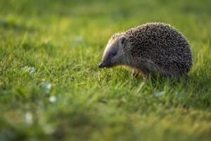 Das Bundesnaturschutzgesetz sorgt in den deutschen Bundesländern für biologische Vielfalt.