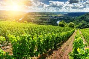 Das Bundesnaturschutzgesetz nimmt auch die Landwirtschaft in die Pflicht.