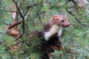In einem Naturschutzgebiet oder Nationalpark sollen Flora und Fauna im Einklang leben können.