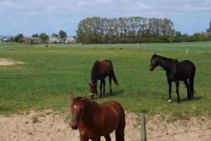 Auch die Pferdemistentsorgung kann durch Bauernhöfe oder Biogasbetreiber geschehen.