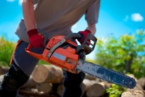 Holz fürs Lagerfeuer: Nicht erlaubt ist es, einfach einen Baum zu fällen.