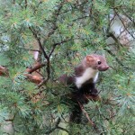 Wichtiger Lebensraum: Illegal Bäume zu fällen verursacht hohe Kosten durch Strafzahlungen.
