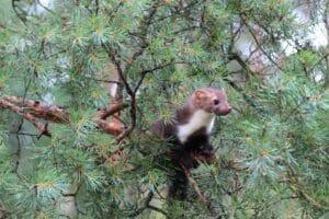 Wichtiger Lebensraum: Illegal Bäume zu fällen, kann hohe Kosten durch Strafzahlungen nach sich ziehen.