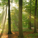 Wild zu campen kann in Deutschland sehr schön sein.