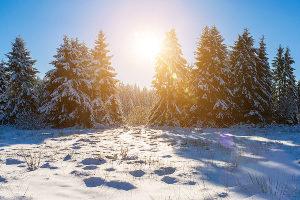 Ein Weihnachtsbaum bringt viel Freude - aus rechtlicher Sicht ist allerdings einiges zu beachten.