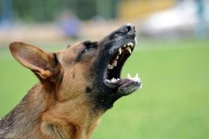 Rechtlich gesehen können Personen, die vom Hund gebissen wurden, Schmerzensgeld verlangen.