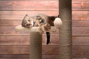 Wurde eine Katze überfahren, ist Fahrerflucht oftmals Thema, wenn das Tier liegen gelassen wird.