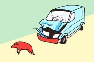 Wildwechsel: Nach einem Wildunfall sollten Sie das Tier nicht anfassen.