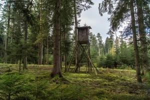 Sie dürfen nur Waldwege befahren, wenn dies einem zulässigen Zweck dient.