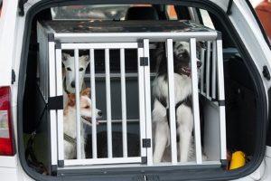 Um einen Hund sicher im Auto zu transportieren, bietet sich eine Transportbox an.