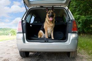 Sie können Ihren Hund im Kofferraum transportieren. Dann sollten Sie jedoch ein Trenngitter montieren.