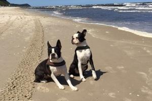 Sind Hunde am Strand verboten?