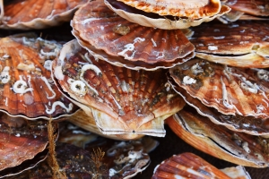 Häufig ist es besser, wenn Reisende keine Muscheln aus dem Urlaub mitbringen.