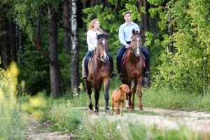 Worauf ist zu achten, wenn Sie mit dem Pferd den Strand und nahe Reitwege erkunden wollen?