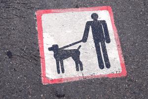 Auch an einem ausgewiesenen Hundestrand kann Leinenpflicht gelten.