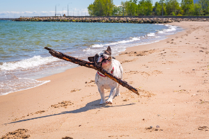 Ostsee: Ein Hundestrand ohne Leinenpflicht kann das Paradies für Vierbeiner sein.