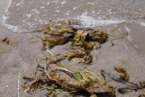 Unsichtbare Gefahr: Plastikmüll am Strand ist teilweise für das menschliche Auge kaum zu erkennen.