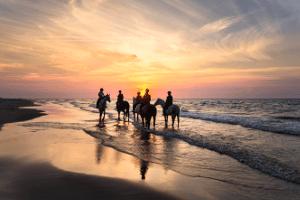 Reiten am Meer: an Nordsee, Ostsee oder anderen Gewässern finden auch die Pferde eine Abkühlung.