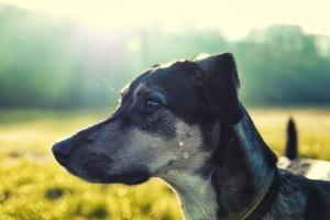 Dürfen Hunde im Wald frei laufen? Das ist regional unterschiedlich geregelt.