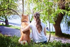 Wer Hunde im Wald unerlaubt frei laufen lässt, muss mit Bußgeldern rechnen.