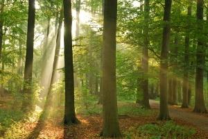 Verhalten im Wald: Schon Kinder lernen wichtige Regeln in der Schule.