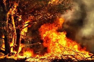 Im Wald kann ein Rauchverbot gelten. Dadurch soll Bränden vorgebeugt werden.