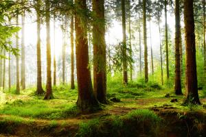 Müll hat im Wald nichts verloren. Dieser stellt nämlich für viele einen Ort zum Erholen dar.