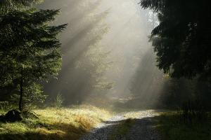 Parken im Wald kann bei großer Trockenheit zur Gefahr für das Ökosystem werden.