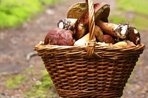 Pilze sammeln: Ist das verboten?